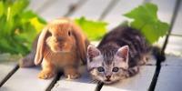Huisdieren worden nooit saai!