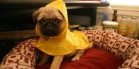 Tips om je hond lekker warm te houden deze winter